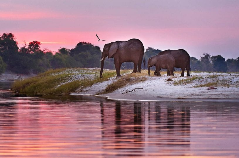 Botswana's Timeless Wilderness