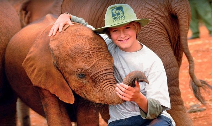 Safari boy with elephant