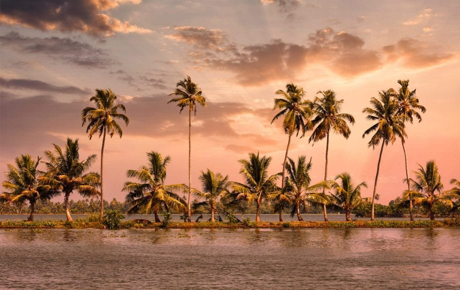 The scenic land of coconut trees