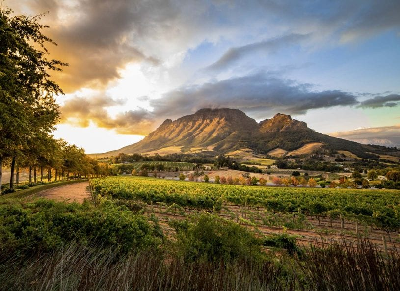 Stellenbosch, Franschhoek and the Cape Winelands