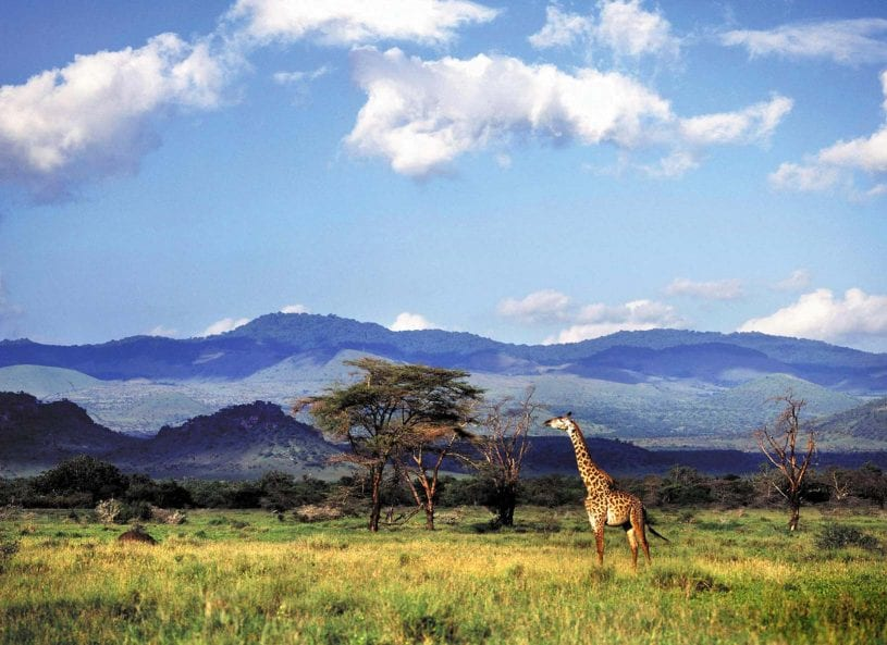 Giraffe at The Chyulu Hills