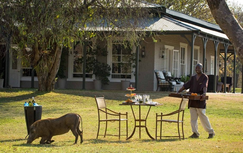 SABI SANDS IS THE BEST PLACE IN THE WORLD FOR A SAFARI